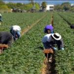 Canada farm worker visas